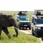 POSTPONED: Yoga & Safari Retreat in Tanzania