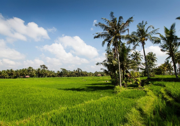 Yoga, Culture & Balinese New Year